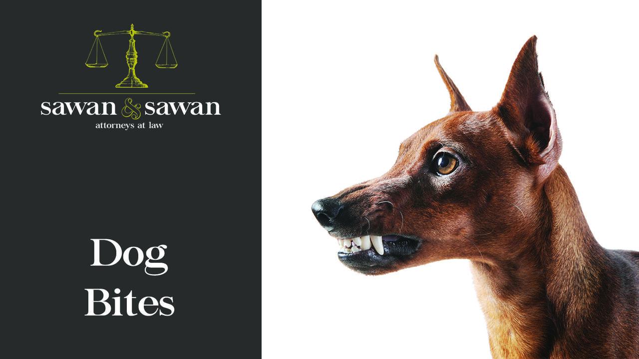 Toledo Dog Bite Lawyer
